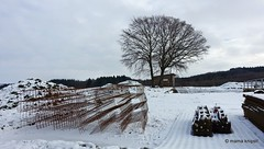 Winter in der Eifel - Explore Feb 1, 2016 #349 (mama knipst!) Tags: schnee winter snow germany deutschland eifel nettersheim