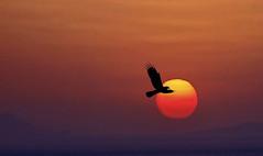 Sunset over Santorini (B.Schroter) Tags: sunset red sky sun bird greece silouhette