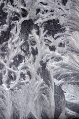 Eisblumen am Fenster   ---  Frost flowers (Christandl) Tags: ice kalt icecrystal iceflowers frostflowers eisblume frsot