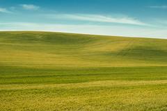 The Palouse, Washington (Mr. Ansonii) Tags: blue summer green landscape washington nikon farm bluesky hills crops  backroads palouse       thepalouse  d3300