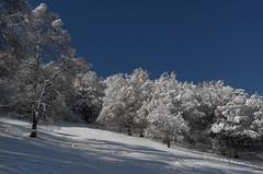 Traversata Bassa - incipit (Alberto Cameroni) Tags: leica haiku neve poesia inverno basho mattino traversatabassa leicaxtyp113