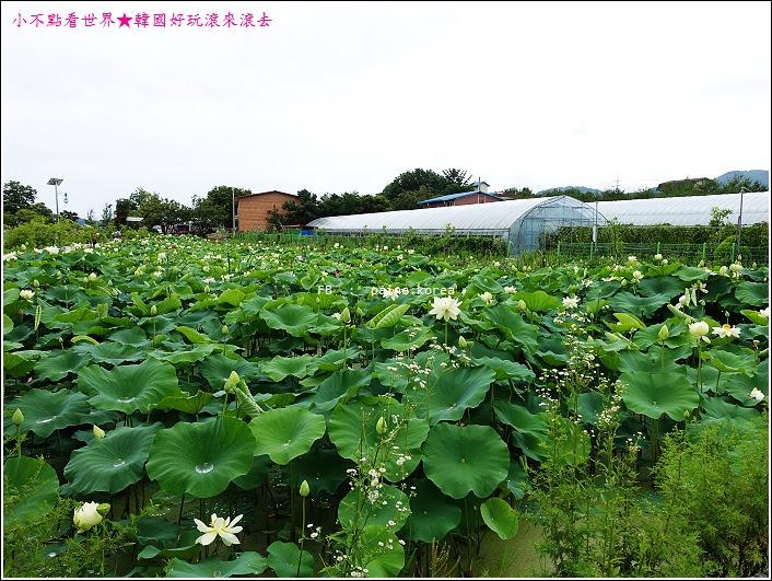 京畿道 兩水頭 洗美苑 (53).JPG