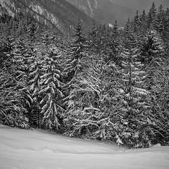 Sudelfeld - Germany (Nobsta) Tags: winter tree germany landscape deutschland fuji nik fujinon baum sudelfeld xt1 silverefex