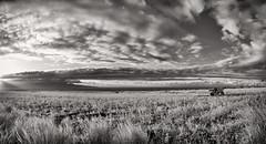 FLA-160225-ND800E-381PA85-IR-CF (ferlopez) Tags: sunset usa rural landscape harvest scenic haliimaile mauihawaii