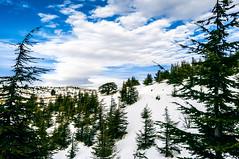 Al-Shouf Cedar Reserve (jean.saliba) Tags: lebanon snow narrows cedars barouk