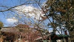 Japanese Plum (ume) Blossoms @Nara Park (cw's) Tags: japanese plum umeblossoms