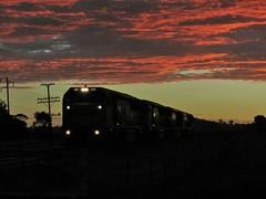 Train #3112 with locos 1104+1107+1101+CM3303 pass through Illabo at sunset. (edit1) (Amateur-Hour Photography) Tags: railroad train canon rail railway trains pointandshoot locomotive railways locomotives australiantrains