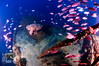 Dolphin 1 (ShaunMYeo) Tags: scubadiving gibraltar wrecks littlebay calpe underwaterphotography جبل gibilterra ikelite artificialreef طارق גיברלטר dolphin1 直布罗陀 гибралтар γιβραλτάρ gibraltár الطارق cebelitarık gjibraltar ĝibraltaro hibraltar xibraltar giobráltar gibraltārs gibraltaras ġibiltà जिब्राल्टर ஜிப்ரால்டர் జిబ్రాల్టర్ ยิบรอลตา جبرالٹر גיבראַלטאַר गिब्राल्टर জিব্রাল্টার 直布羅 陀જીબ્રાલ્ટર ジブラル