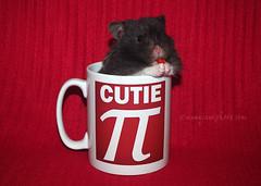 Happy Pi Day! (.annajane) Tags: cute hamster mug 314  piday redbackground syrianhamster happypiday march14th cutiepi happyday piday2016