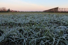 Vorst aan de grond (Omroep Zeeland) Tags: winter koud vorst rijp