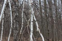 IMG_0386 ( Szczep Wodny Batyk ) Tags: zima wiosna brucetrail snieg wedrowka szczepwodnybaltyk szczepbaltyk silvercreekconservationarea wedrownicy druzyna16ta starsiharcerze