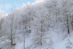 Belate. Navarra (Javier Frauca) Tags: winter snow canon landscape nieve paisaje invierno navarre navarra nafarroa velate 70d belate puertodevelate puertodebelate