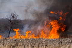 the burning bush (contemplative imaging) Tags: statepark hot nature fire march illinois spring natural dam smoke flames il flame burn swamp wetlands marsh prairie ci wetland 2016 mchenrycounty morrainehills blackternmarsh contemplativeimaging ronzack cimhsp20160321 20160321