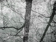 Metallic Meets Nature (Rossdxvx) Tags: trees winter plant abstract reflection tree art texture nature silhouette woods rust shadows outdoor decay michigan metallic surrealism lofi surreal overlay gritty textures grime minimalism decaying textured 2015