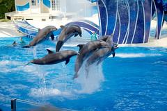Jumping for Joy (FerencSeitz) Tags: world sea outdoors orlando jumping nikon florida dolphins seaworld nikor ferencseitzphotography d800e
