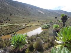 IMG_0931 (John Steedman) Tags: africa trek kenya afrika kenia afrique eastafrica mountkenya ostafrika     afriquedelest