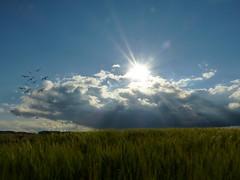 Memories of a nice summer day (MsAndi63) Tags: sommer himmel getreide ostalb summerpanasoniclumixfz150 kornfeldwolken