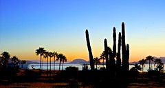 Early morn (malcolmharris64) Tags: ocean california trees sunset sea seascape sonora cacti sunrise landscape mexico palm bahia sancarlos golfo seaofcortez semitropical bocochibampo