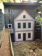 The bunny House and Yard (still under development ) (Yvonne Thompson) Tags: bunny bunnies rabbits bunnie lopeared rabbithouse bunnyhouse