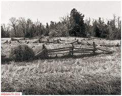 Un-kept field (DelioTO) Tags: ontario canada rural landscape blackwhite spring woods trails april historical 4x5 toned schneider lensed 210mm autaut aph09 panx64