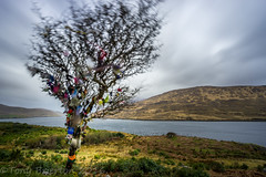 The Fairy Tree. (Tony Brierton) Tags: tree prayer fjord wish comayo killaryharbour 7416