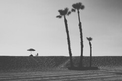 untitled . (helmet13) Tags: d800e raw bw silence dike sand palmtrees parasol foldingchair sealbeach california usa aoi heartaward peaceaward world100f 100faves simplicity