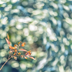 Drowning in a Sea of Nature (Mike Golding) Tags: light sunlight nature bokeh naturallight bokehlicious natureycrap goldenbokeh