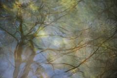In the river (Lisbeth Pettersen) Tags: tree nature river branches natur abstraction vann abstrakt elv refleks speiling speilinger gjersjelva