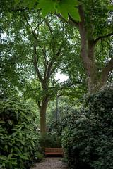 Open Garden Squares 2015 - 1845.jpg (DavidRBadger) Tags: city london greenspace planetree 2015 cityofwestminster londonplanetree urbansquare opengardensquares thetravellersclub carltonhouseterracegarden