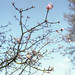 Spring branches - part 11