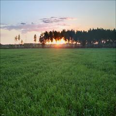 Sunset in the Smolensk region (ArtDen82) Tags: sunset field europe village russia district region smolensk gagarin melekhovo