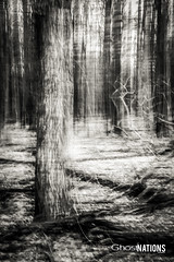 Lost In The Haunted Forest Of Forgetfulness (Ghost Of Nations Photography And Digital Art) Tags: trees light blackandwhite bw black tree lines forest dark gloomy line disturbing liminal disquiet ghostofnations ghostofnationsphotography