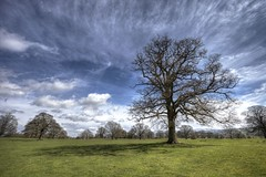 Parkland, Wenlock Edge (717Images) Tags: park field sunshine rural countryside spring shropshire meadow wenlock