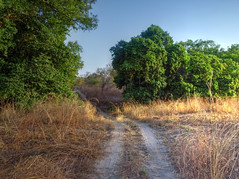 Safari, Fathala Reserve, Senegal (**Anik Messier**) Tags: africa nature animals reserve safari senegal animaux afrique wildness rserve snral