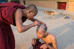 Shaving time for the monks in Shan State, Myanmar. (Jeff Williams 03) Tags: dog monks myanmar shanstate headshaving