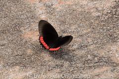 Argentinien_Insekten-64 (fotolulu2012) Tags: tierfoto