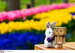 Buddies (Booo Zone☮) Tags: dof bokeh tulip danbo lale emirgan revoltech danboard minidanboard turiiye