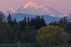 Alpenglow (mfeingol) Tags: sunset washington skagit mountvernon mountbaker alpenglow skagitcounty skagitflats