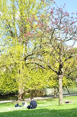 Parc Montsouris, Paris 14e (Formosa Wandering) Tags: paris fleur parcmontsouris