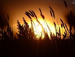 Valle de Mexicali (El Lemus) Tags: life california naturaleza sun art sol nature field weather mexico arte desert martin natural natura el vida campo bajacalifornia desierto baja soles suns mexicali norte trigo clima lemus martinlemus ellemus