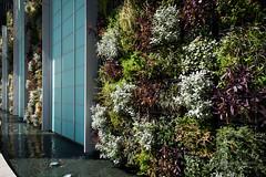 Exterior of Shinagawa Season Terrace () (christinayan01) Tags: building japan architecture tokyo office perspective
