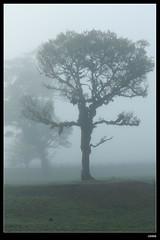 DP1U6628 (c0466art) Tags: light beautiful grass fog creek canon landscape scenery atmosphere mysterious land 1dx c0466art