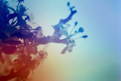 blur-dreamy-texture-texturepalace-17 (texturepalace) Tags: blur color leaves cc creativecommons dreamtextures texturepalace blurtextures