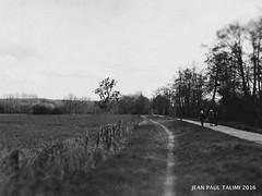 Jour de promenade (JEAN PAUL TALIMI) Tags: france texture nature monochrome noir noiretblanc traces bourgogne campagne arbre calme vieux feuille ciels touristes exterieur villeneuvesuryonne talimi campagnebourguignonne