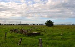 outside North Woodburn (dustaway) Tags: fence landscape flat australia bamboo nsw scrapmetal kikuyu northernrivers richmondvalley