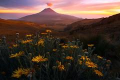 Prefect Ending (circleyq) Tags: sunset cloud flower last mexico volcano elevation wildflower erupt popocatepetl popo