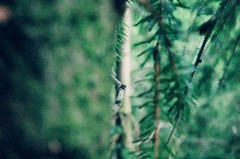 Peek-a-twig! (stefanleegoodwin) Tags: wood trees sea brown tree green nature water beauty grass pine forest wonderful outside outdoors photography scotland sticks high bush branch natural bokeh branches air scottish tags fresh explore climbing needle bark twig stick gr loch noise twigs bushes spruce ricoh noisy prana noisey bokehlicious bokehtastic