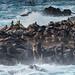 organic life (nosha) Tags: ocean sea beautiful beauty island lion sealion nosha