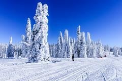 Tiny in front of the snow ghosts (pn.praveen) Tags: winter white forest frozen montana idaho yellowstone rime targhee winterwonderland blueandwhite snowmobiling snowghost twotopmountain