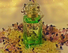 151108 pgh 160114  Thethi (thethi: pls read the 1st comment) Tags: parfum bouteille plante bokeh hpital namur wallonie belgique belgium setobjetsnew setnamurcity provincenamur bestof2015 faves36 rubyinv